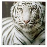 Portrait of tiger large square tile