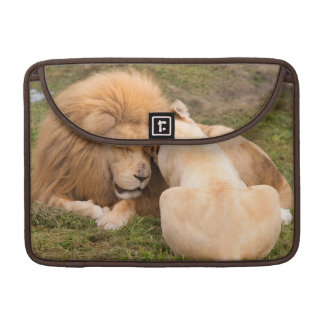 Portrait of Timbavati White lion male and female MacBook Pro Sleeves