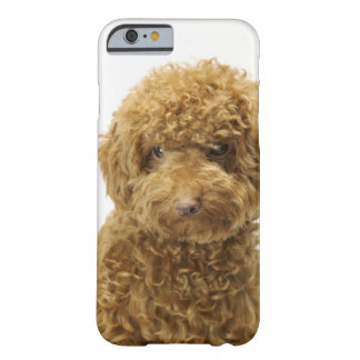 Portrait of Toy Poodle Barely There iPhone 6 Case