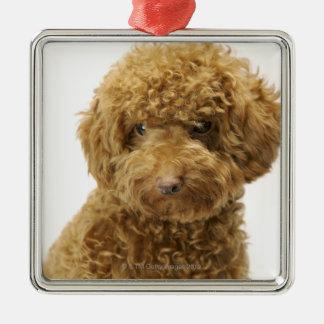 Portrait of Toy Poodle Metal Ornament