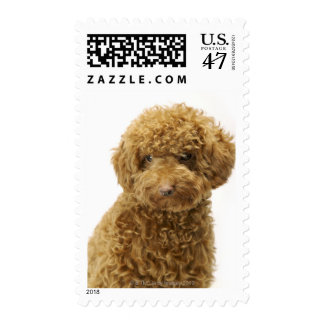 Portrait of Toy Poodle Postage Stamp