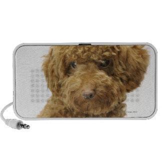 Portrait of Toy Poodle Speaker System