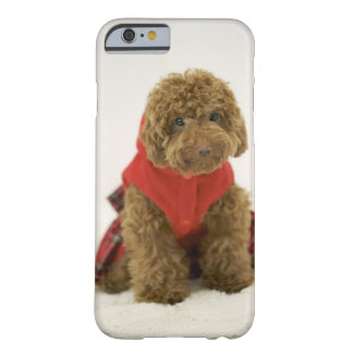 Portrait of Toy Poodle wearing cloth sitting Barely There iPhone 6 Case