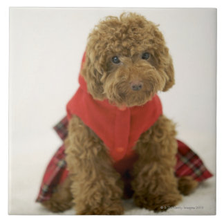 Portrait of Toy Poodle wearing cloth sitting Ceramic Tile