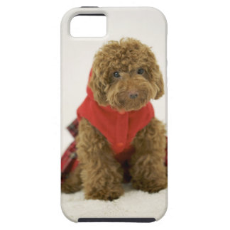 Portrait of Toy Poodle wearing cloth sitting iPhone SE/5/5s Case