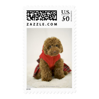 Portrait of Toy Poodle wearing cloth sitting Postage