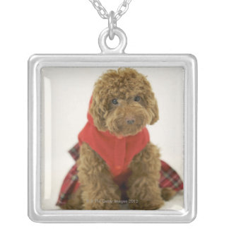 Portrait of Toy Poodle wearing cloth sitting Silver Plated Necklace