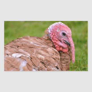 Portrait of turkey rectangular sticker