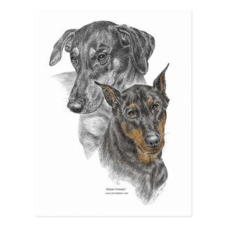 Portrait of Two Dobermans Postcard