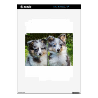 Portrait of two young sheltie dogs decal for iPad 2