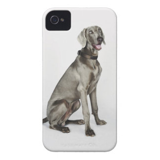 Portrait of Weimaraner dog iPhone 4 Case