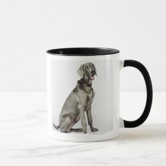Portrait of Weimaraner dog Mug