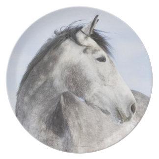 portrait of white horse 2 party plates