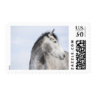 portrait of white horse 2 postage