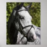 portrait of white horse 2 print