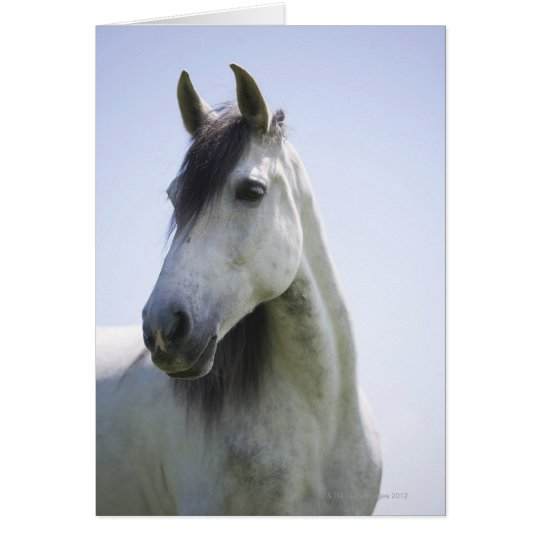 portrait of white horse card