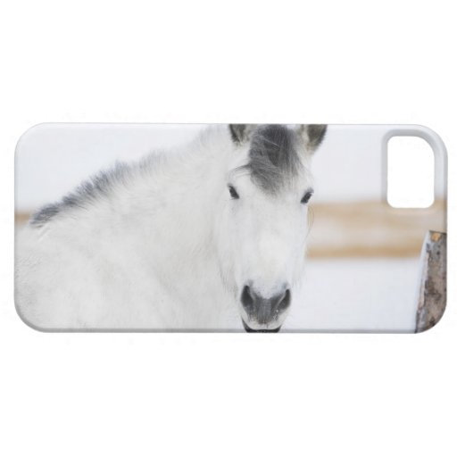 portrait of white horse iPhone 5 cases