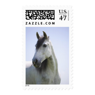 portrait of white horse postage