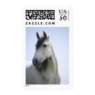 portrait of white horse postage