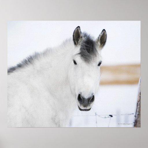 portrait of white horse poster