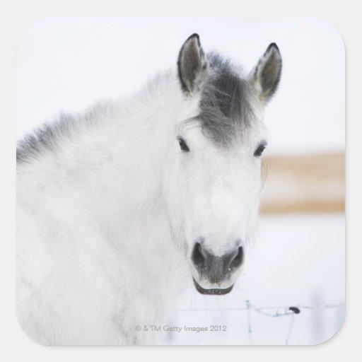 portrait of white horse square sticker