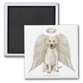 Portrait of white Labrador retriever wearing 2 Inch Square Magnet