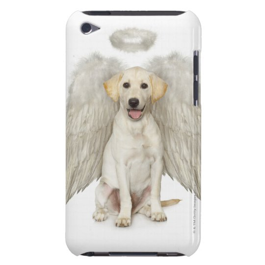 Portrait of white Labrador retriever wearing Barely There iPod Cover