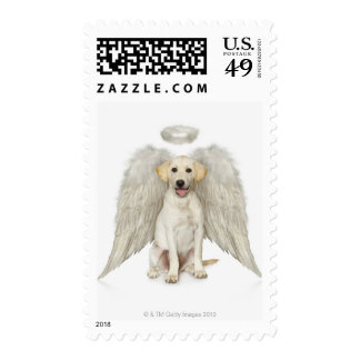 Portrait of white Labrador retriever wearing Stamps