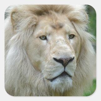 Portrait of white lion square sticker