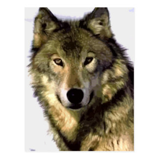Portrait of Wolf Post Card