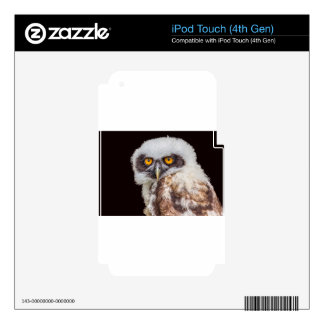Portrait of young spectacled owl iPod touch 4G decal
