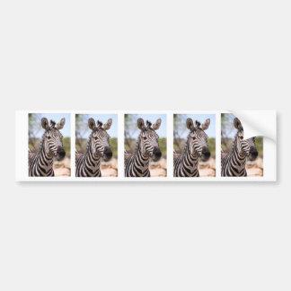 Portrait of zebra bumper sticker