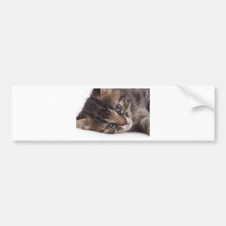 portrait off tabby kitten car bumper sticker