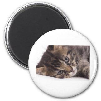 portrait off tabby kitten magnet