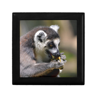 Portrait ring-tailed Lemur Gift Box