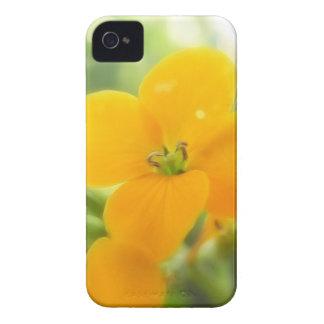 Portrait - Siberian Wallflower Case-Mate iPhone 4 Cases