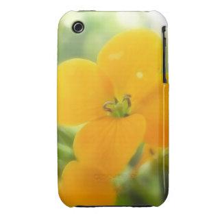 Portrait - Siberian Wallflower iPhone 3 Cases