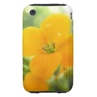 Portrait - Siberian Wallflower iPhone 3 Tough Case