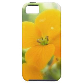 Portrait - Siberian Wallflower iPhone SE/5/5s Case