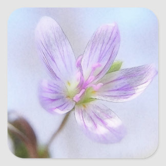 Portrait - Spring Beauty Flower Square Sticker