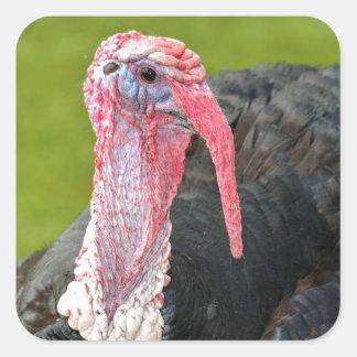 Portrait turkey square sticker