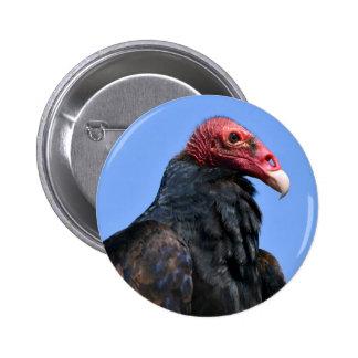 Portrait Turkey vulture Buttons
