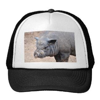Portrait Vietnamese potbellied pig Trucker Hat