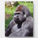 Portrait western lowland gorilla photo plaque