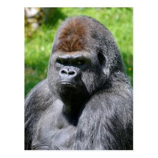 Portrait western lowland gorilla postcard