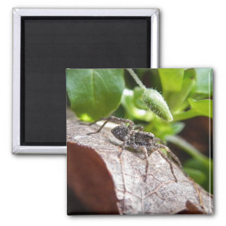 Portrait - Young Spider 2 Inch Square Magnet
