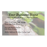 Portrait - Young Spider Business Card