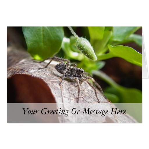 Portrait - Young Spider Greeting Card