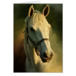 portriat del caballo tarjeton