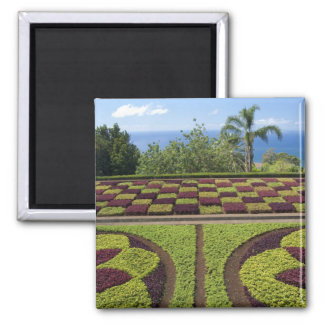 Portugal, Madeira Island, Funchal. Botanical 2 Inch Square Magnet